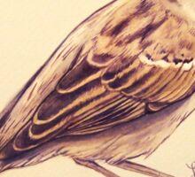 Female House Sparrow Sticker
