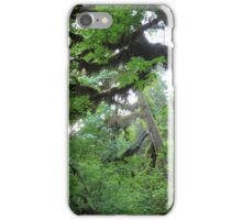 Beautiful trees in Olympic National Park iPhone Case/Skin