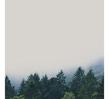 muir woods | mill valley, california Photographic Print