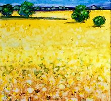 Canola field by Klara Ward