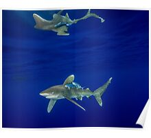 Cruising Oceanic White Tip And Surface Reflection Poster
