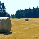Hay Bales in Field by Alemay