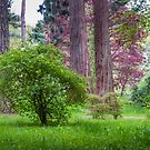 Sequoias and May Blossom by vivsworld