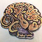 Ball Python by Rebecca Koller