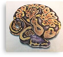 Ball Python Canvas Print