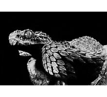 Snake Photographic Print