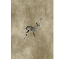 Deer Skeleton Photographic Print