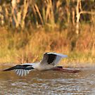 The Stork Arrow by byronbackyard