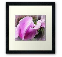 Cyclamen Flower - neighbour's garden Framed Print