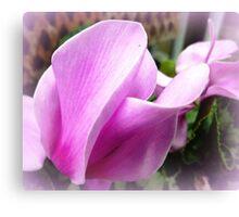 Cyclamen Flower - neighbour's garden Canvas Print