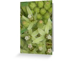Primrose or Zizotes or Longhorn Milkweed  Closeup Greeting Card
