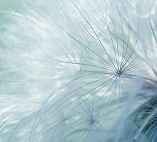 Wispy  #2 by Laurie Minor