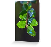 Fagus - in the rainforest Greeting Card
