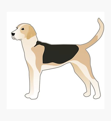 English Foxhound Basic Breed Silhouette Photographic Print