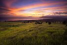 Upcountry Sunset - Maui by Michael Treloar