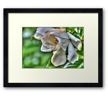 Flower out of a Bush Framed Print