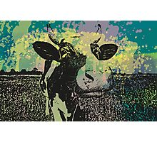 BD COW Photographic Print