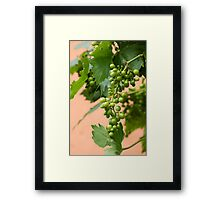 grape and vineyard Framed Print