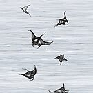 Manta rays in flight by ankastan