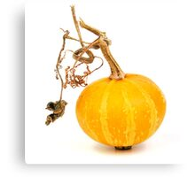 Yellow decorative pumpkin on a white background Canvas Print