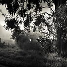 Gembrook Early Morning by Christine  Wilson Photography