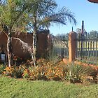 Aloes sharing space by Maree  Clarkson