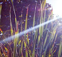 Tall Grass by Marinamade