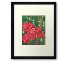 Red Torch Ginger Flower in Hawaii Framed Print