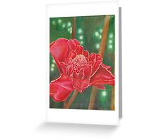 Red Torch Ginger Flower in Hawaii Greeting Card