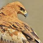 Tawny Eagle - Majestic - African Wild Bird Background by LivingWild