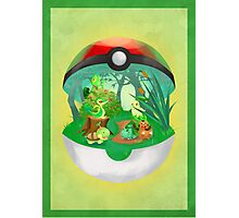 Pokemon: Grass Starters Home Photographic Print