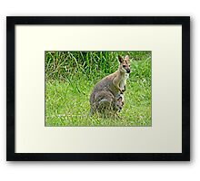 Wallaby with Joey Framed Print