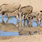 Warthog Family - African Wildlife by LivingWild