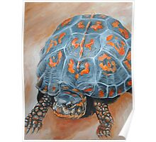 Box Turtle Taking A Walk Poster