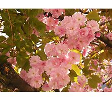 Springtime's Greeting Photographic Print
