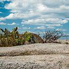 Boulder at Wingaersheek Beach, Gloucester, MA Lowtide by Rebecca Bryson