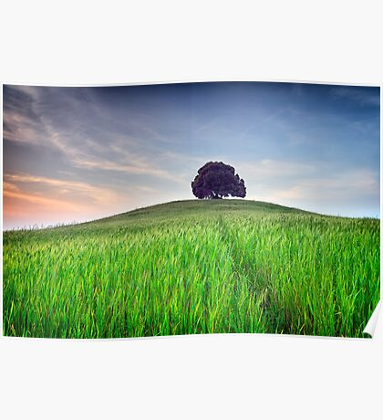 The Tuscany Chestnut tree Poster
