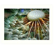 Puffed Out Art Print
