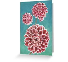 Pink Dahlias Greeting Card