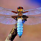 Dragonfly by NaturesEarth
