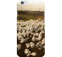 Cotton Grass iPhone Case/Skin