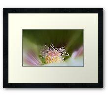 Hollyhock Macro Framed Print