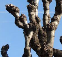 Sturdy tree toward the blue sky Sticker