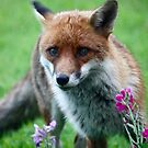 Posing by the flowers! by avocet