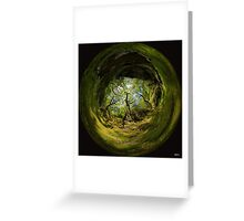Ness Glen, Mystical Irish Wood Greeting Card