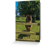 Pony Greeting Card