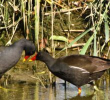 The sweetness and love of a pair of moorhens 2 Sticker