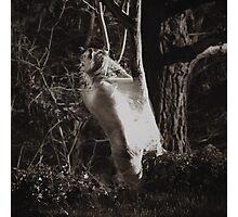 Cocoon Photographic Print