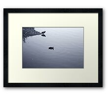Duck and coot Framed Print