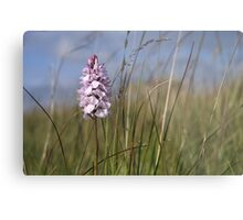 Spotted Orchid,  Portnoo, Co. Donegal Metal Print